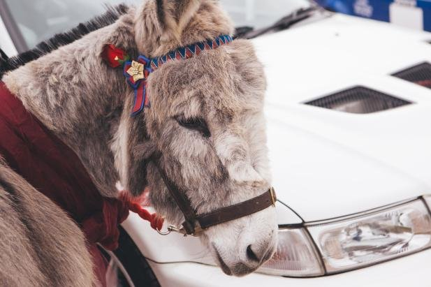 A donkey and a car