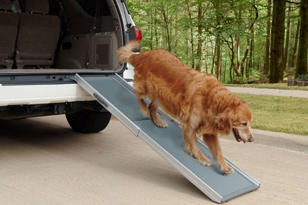 A dog climbing from a car