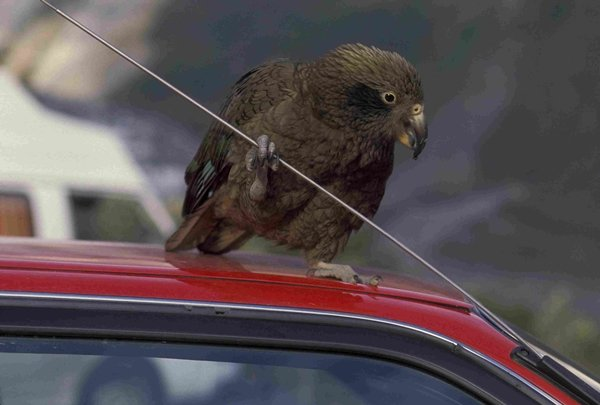 a bird holding car antenna