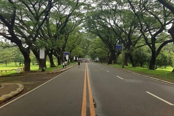 A road in the UP Diliman campus