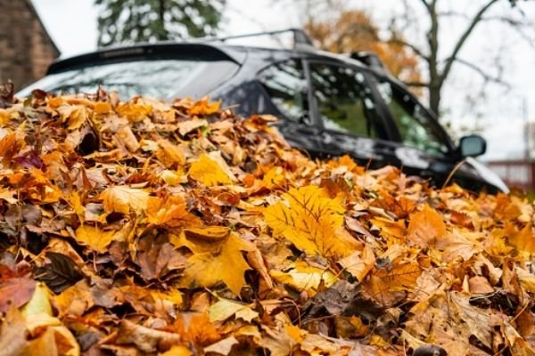 A picture of a car among leaves.