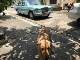 2nd Hand Mercedes-Benz 220 1969 at 90000 km for sale in Makati