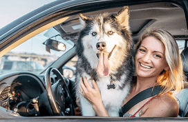 Driving with your dog around town: What car accessories would you need?