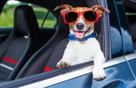 Things to consider when buying a pet-friendly car