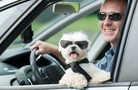 Essential tips to keep in mind when driving with dogs