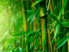 Ford to bring bamboo in your next car