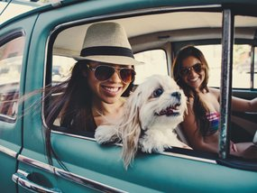 9 Must-Have Things in a Pet-Friendly Car