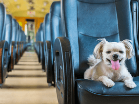 LTFRB now allows your pets to ride with you on Public Utility Vehicles (PUVs)