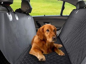 How to Clean Pet Urine Off Car Seat