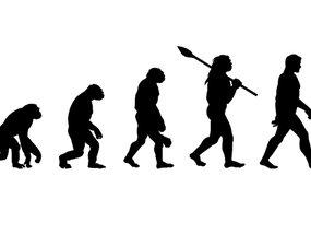 Evolution of Cars