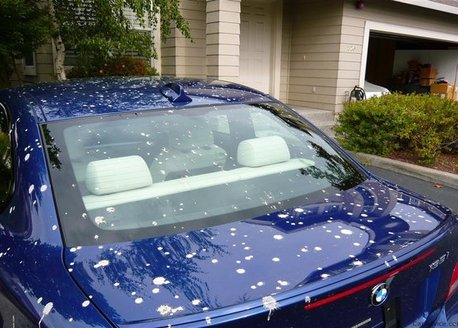How to remove bird poop stains from car without ruining your car's paint