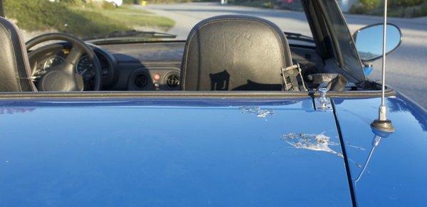Bird droppings on car